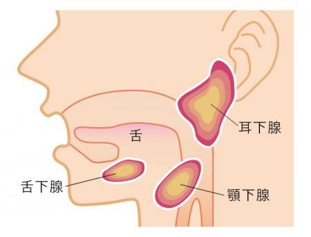 頚椎神経のお話(4)