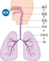 胸椎神経のお話(1)